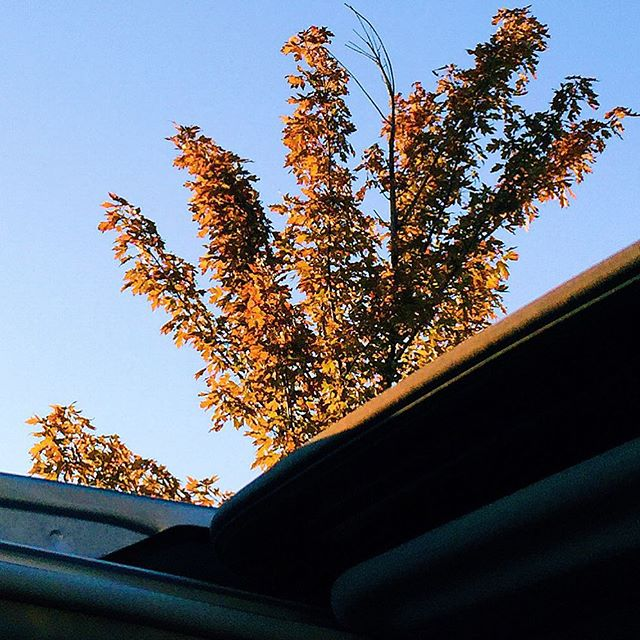 It was a moon roof open, inhale the fresh air, feel the warm sun kind of day. So that's what I did. #IChooseBeauty Day 668