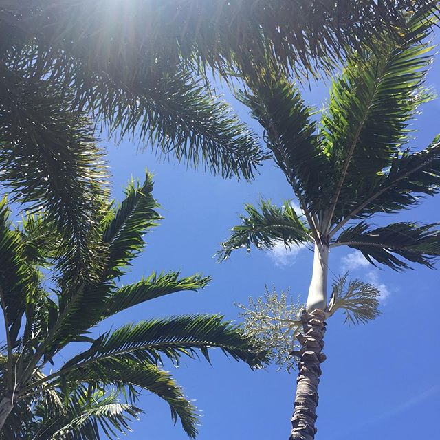 Palm trees and blue skies. All is good. #itsthelittlethings #IChooseBeauty Day 929