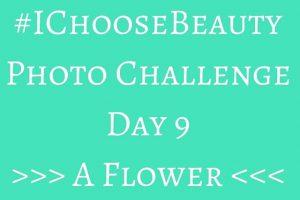 #IChooseBeauty August Challenge – Day 9