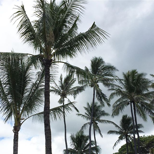 Palm trees on a rainy day. My nature pick for today's #IChooseBeauty Challenge. #IChooseBeauty Day 1276