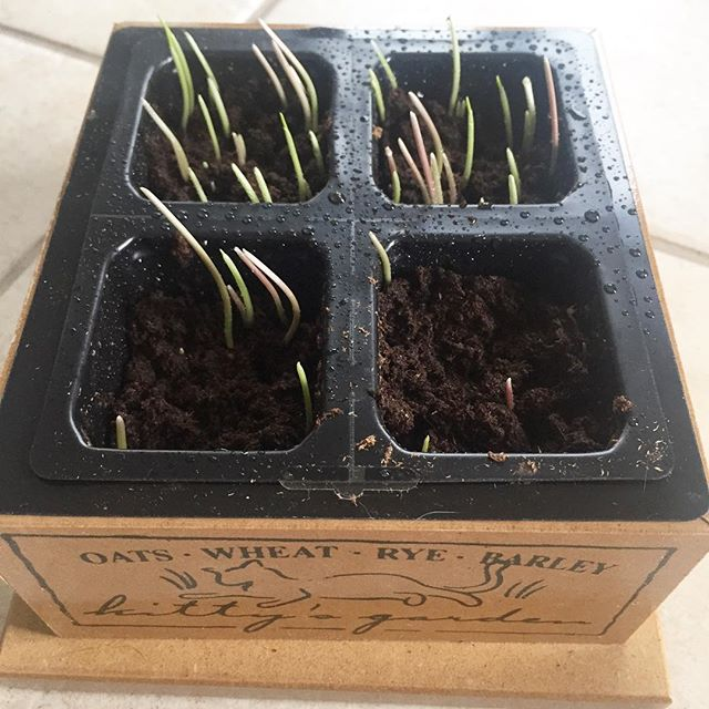 You guys, I made something grow! This might be a first for me! #truestory #brownthumb #IChooseBeauty Day 1373