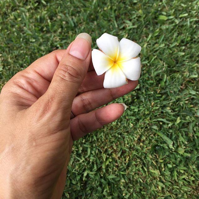 Look at this sweet little teeny tiny itsy bitsy plumeria. #sotiny #IChooseBeauty Day 1451