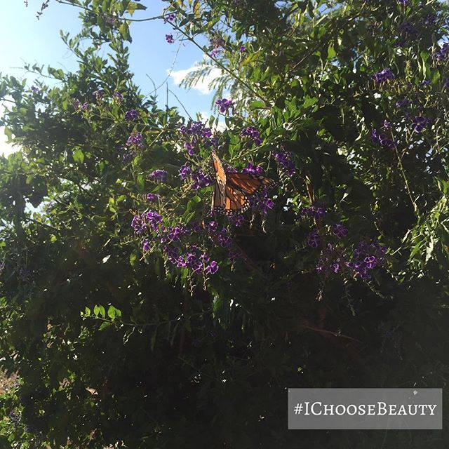 Keep seeing so many butterflies today! Does that mean anything? 🤔🦋#IChooseBeauty Day 1543