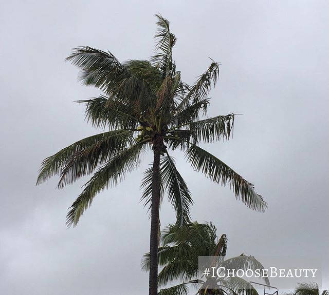 Stormy Sunday. #IChooseBeauty Day 1551