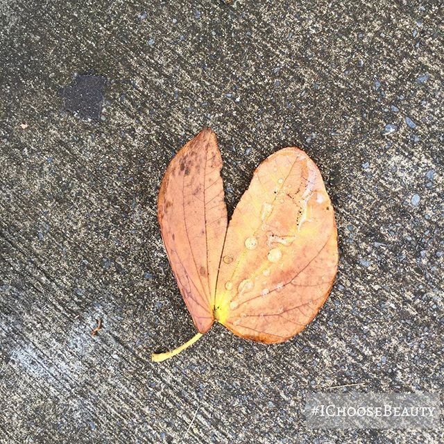 Saw this rain-kissed heart-shaped leaf while I was on a walk this afternoon. What beauty did you see today? #IChooseBeauty Day 1756