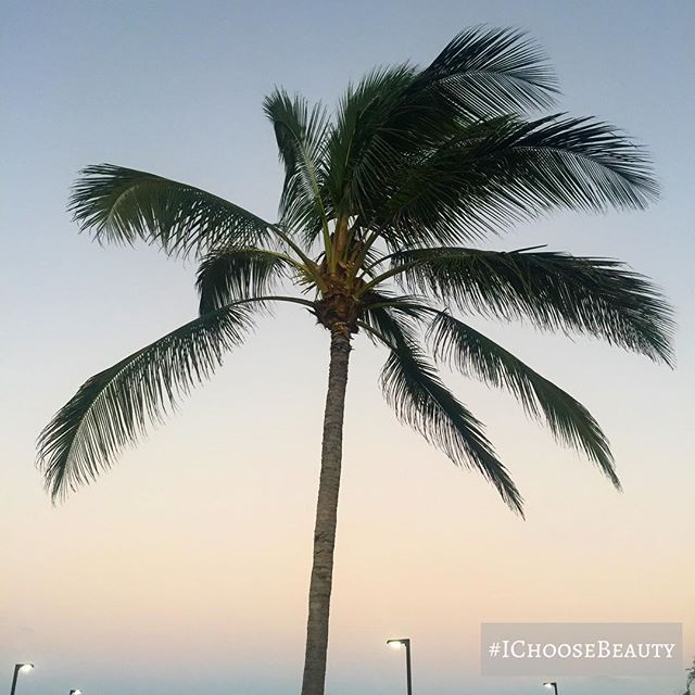 Peaceful palm tree, looking so pretty at sunset. #eveningwalk #lookaround #ichoosebeauty Day 1814