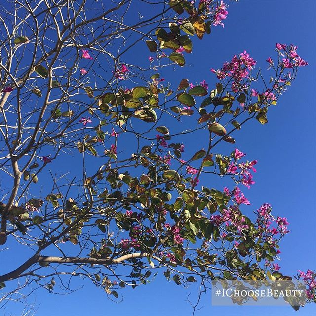These pink flowers against the blue sky! #naturesart #ichoosebeauty Day 1888