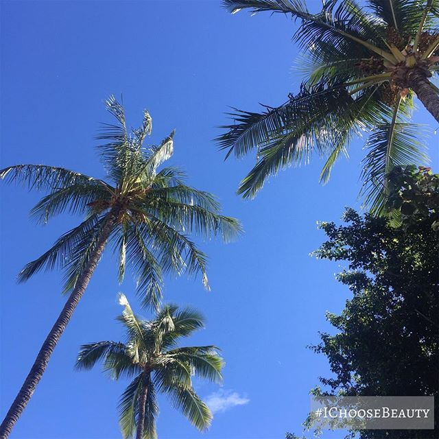 Blue skies + palm trees = perfection. #ichoosebeauty Day 1877