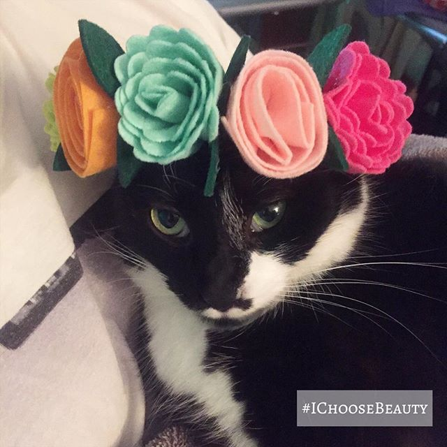 I'm so excited that she let me put this beautiful floral crown on her head! I wonder what she'll be wearing next... 🤔🤣🤣 #funwithcats #catdressup #ichoosebeauty Day 1902