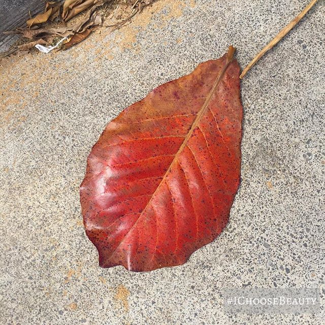 Sidewalk art.  Love the deep red color of this giant leaf. #ichoosebeauty Day 1937