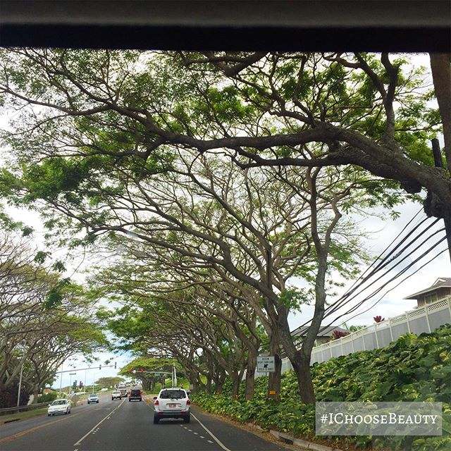 Driving under a tree canopy. #ichoosebeauty Day 1995