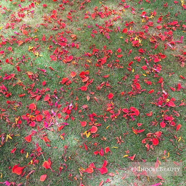 Nature's confetti. #ichoosebeauty Day 2044