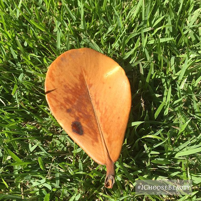 If you look closely, you can see a cool little red mark in the pattern on this little leaf. #ichoosebeauty  Day 2125