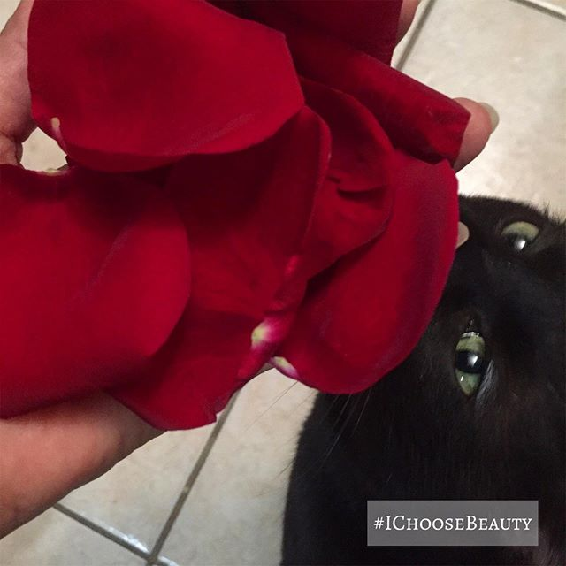 When you're trying to take a picture of pretty rose petals and Clyde is intrigued. And by intrigued, I mean he ate one. Of course. I immediately freaked out and called the vet. Thankfully, they're not toxic to cats so go for it, Clyde!  #ichoosebeauty Day 2141