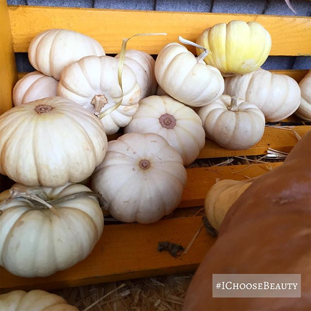 I might be obsessed with pumpkins. Look at these tiny white bebes. #ichoosebeauty Day 2146