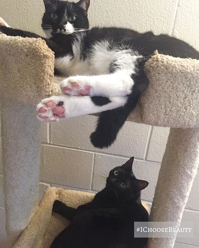 Happy Caturday from these 2 troublemakers! #ichoosebeauty Day 2180