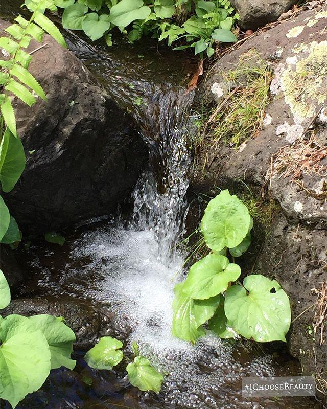 Teeny tiny waterfall. #ichoosebeauty Day 2175