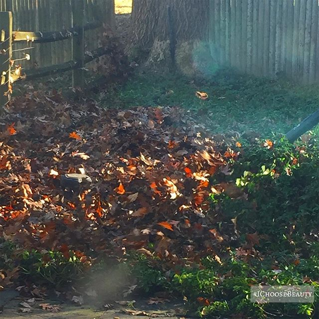 I haven't seen so many leaves in a v long time.  #ichoosebeauty Day 2204