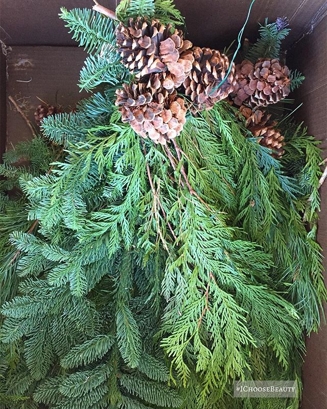 The smell of fresh pine - ahhh! I'd love to bottle it up.  #ichoosebeauty Day 2212