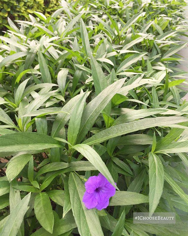 Lone purple flower in a field of green.  #ichoosebeauty Day 2264