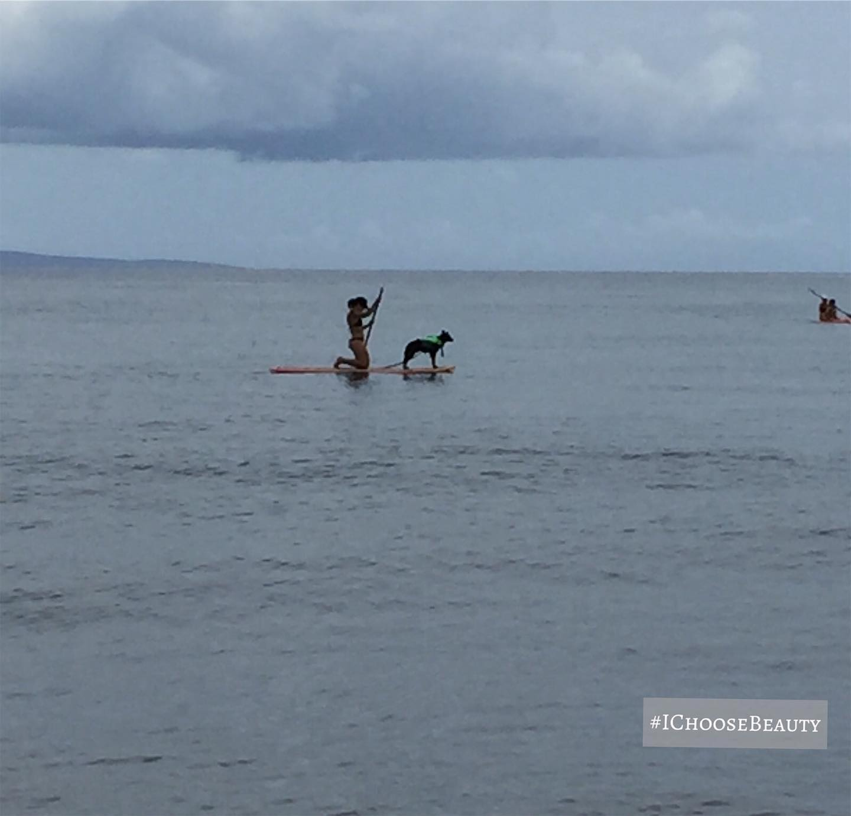 Loookkkkk at the dog on the paddle board!!! #ichoosebeauty Day 2328
