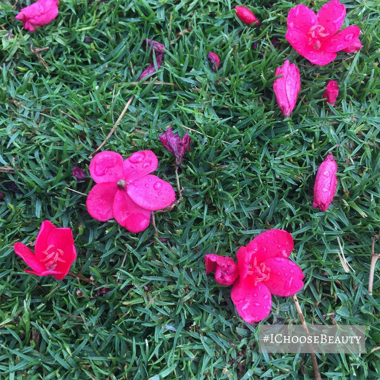 Nature's confetti.    #ichoosebeauty Day 2330