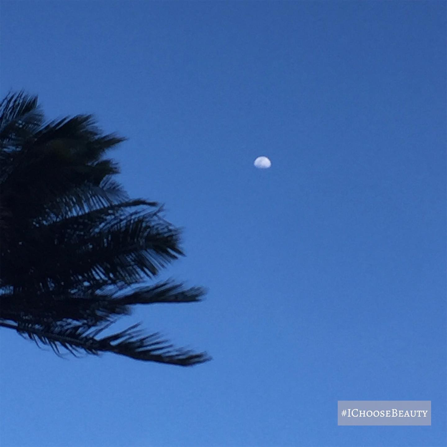 I shot this picture of the moon as Paul was driving - I didn't notice how cool the palm tree looked blowing towards it until I posted this.  #ichoosebeauty Day 2356